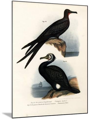 Great Frigate Bird, 1864--Mounted Giclee Print