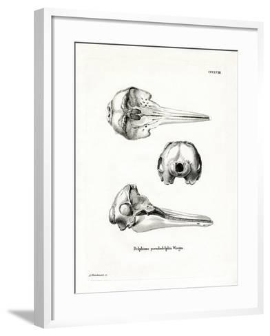 Pantropical Spotted Dolphin Skull--Framed Art Print