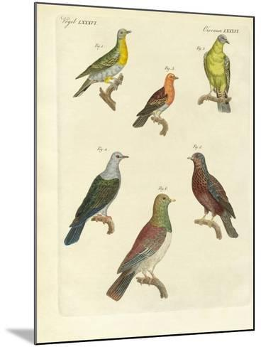 Different Kinds of Exotic Pigeons--Mounted Giclee Print