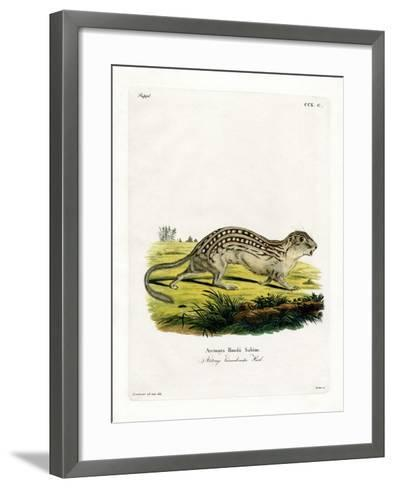 Thirteen-Lined Ground Squirrel--Framed Art Print