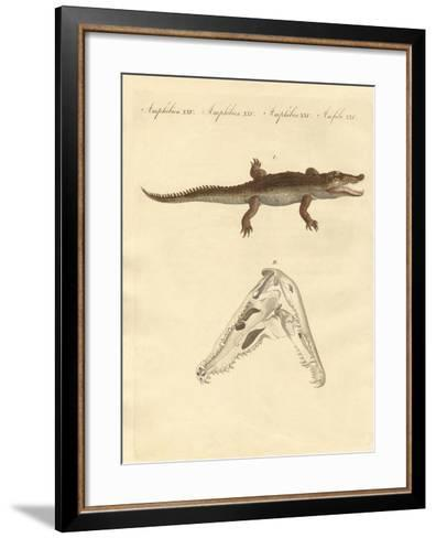 The Crocodile from St. Domingo--Framed Art Print