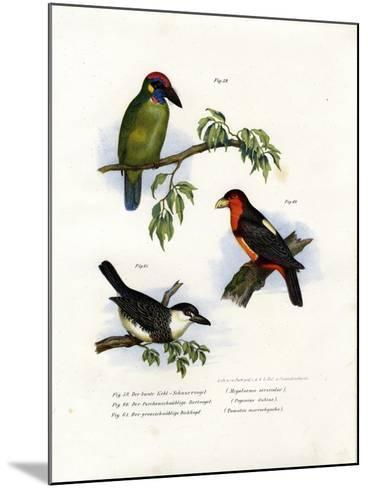 Large Green Barbet, 1864--Mounted Giclee Print