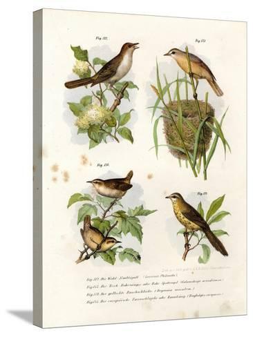 Thrush Nightingale, 1864--Stretched Canvas Print
