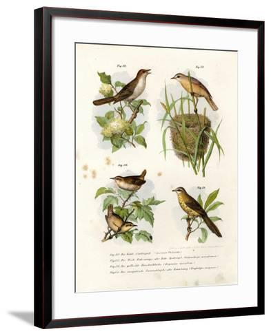 Thrush Nightingale, 1864--Framed Art Print