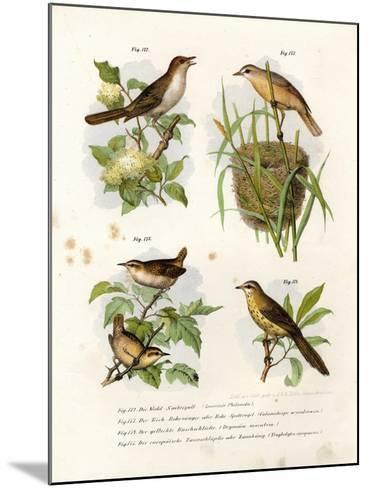 Thrush Nightingale, 1864--Mounted Giclee Print