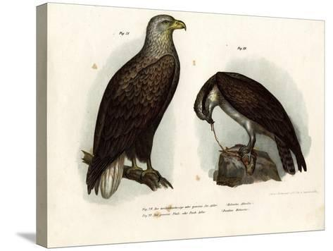 White-Tailed Eagle, 1864--Stretched Canvas Print