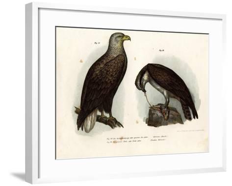 White-Tailed Eagle, 1864--Framed Art Print