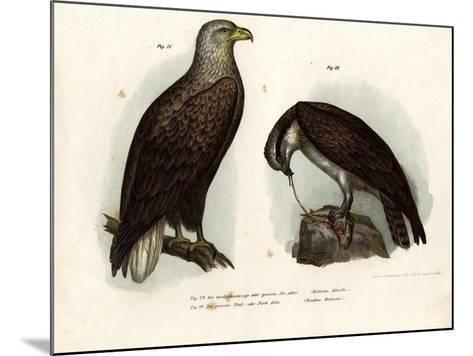 White-Tailed Eagle, 1864--Mounted Giclee Print
