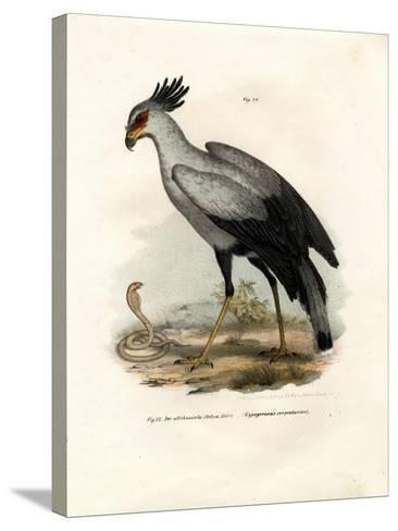 Long-Legged Raptorial Bird, 1864--Stretched Canvas Print