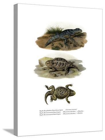 Green Thornytail Iguana--Stretched Canvas Print