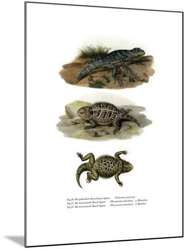Green Thornytail Iguana--Mounted Giclee Print