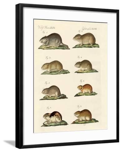 Different Kinds of Mice--Framed Art Print