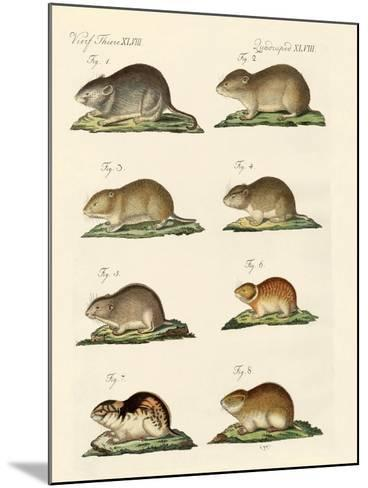 Different Kinds of Mice--Mounted Giclee Print