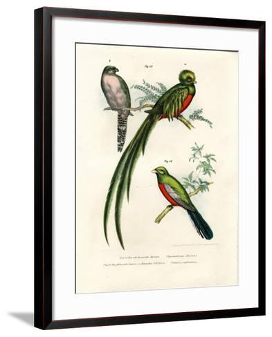 Narina Trogon, 1864--Framed Art Print