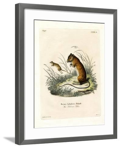 Labrador Jumping Mouse--Framed Art Print