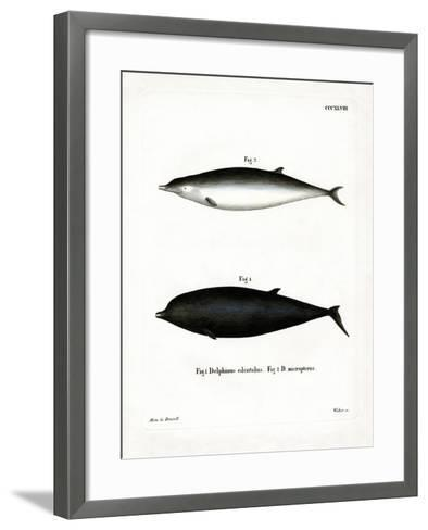 Sowerby's Beaked Whale--Framed Art Print