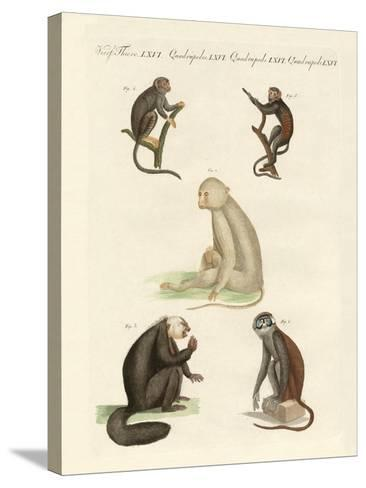 Five Kinds of Monkeys--Stretched Canvas Print