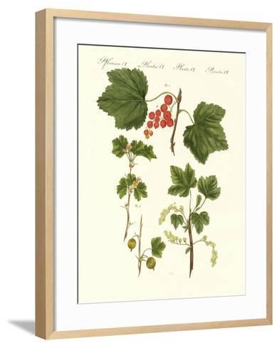 German Kind of Fruits--Framed Art Print