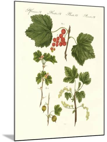 German Kind of Fruits--Mounted Giclee Print