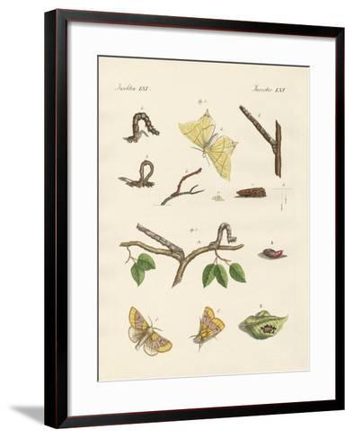German Phalaena Moths--Framed Art Print
