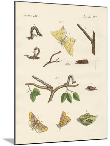 German Phalaena Moths--Mounted Giclee Print
