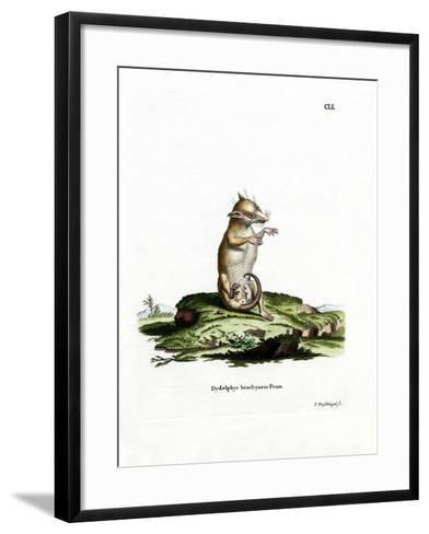 Short-Tailed Opossum--Framed Art Print