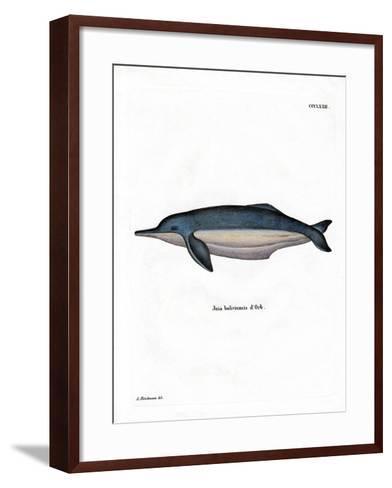 Amazon River Dolphin--Framed Art Print