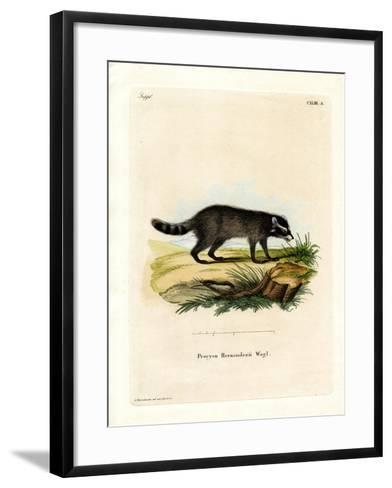 Black-Footed Raccoon--Framed Art Print