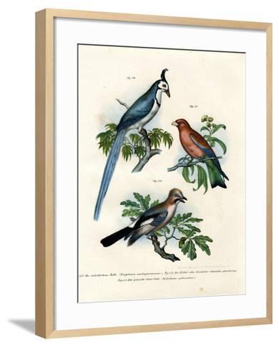 Purple Roller, 1864--Framed Art Print