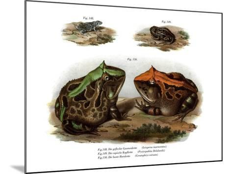 Marbled Four-Eyed Frog--Mounted Giclee Print