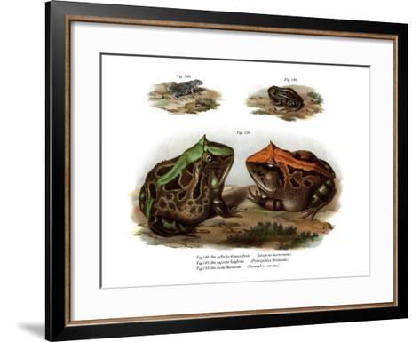 Marbled Four-Eyed Frog--Framed Art Print