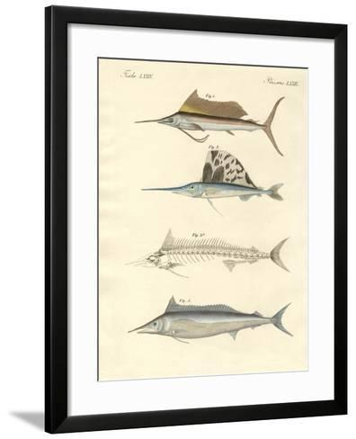 New Mackerel-Like Fish--Framed Art Print