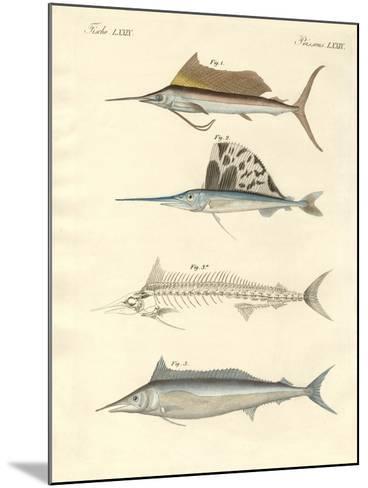 New Mackerel-Like Fish--Mounted Giclee Print
