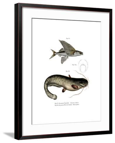 Two-Winged Flyingfish--Framed Art Print