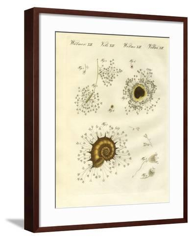 The Cup-Shaped Polyps--Framed Art Print