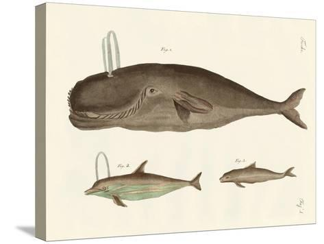Three Kinds of Whales--Stretched Canvas Print
