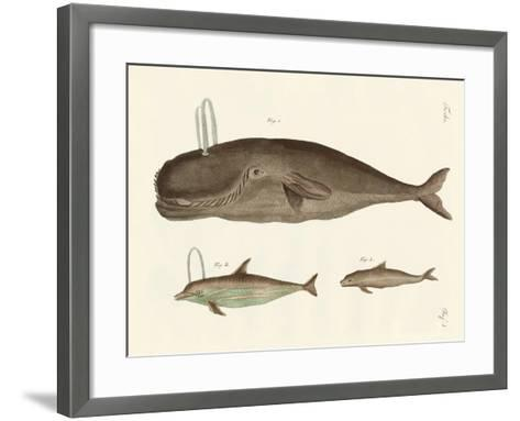 Three Kinds of Whales--Framed Art Print