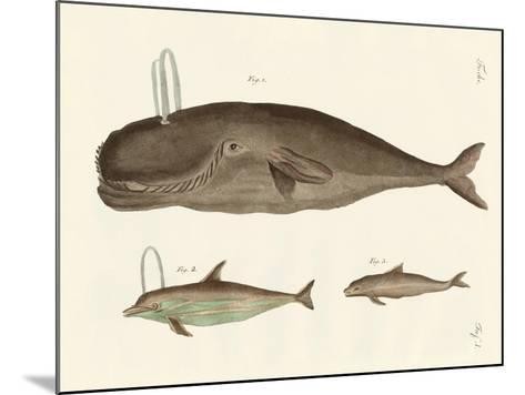 Three Kinds of Whales--Mounted Giclee Print