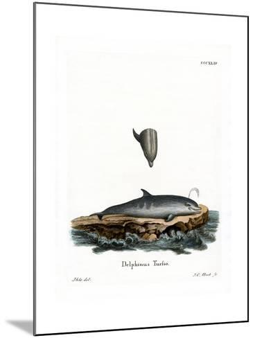 Bottle-Nosed Dolphin--Mounted Giclee Print