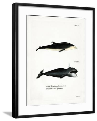 White-Beaked Dolphin--Framed Art Print