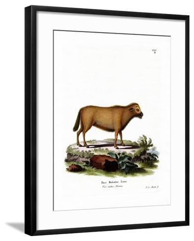 Indian Water Buffalo--Framed Art Print