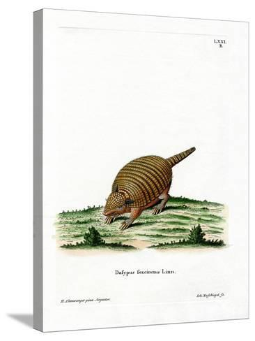 Six-Banded Armadillo--Stretched Canvas Print