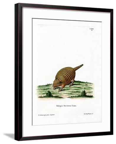 Six-Banded Armadillo--Framed Art Print