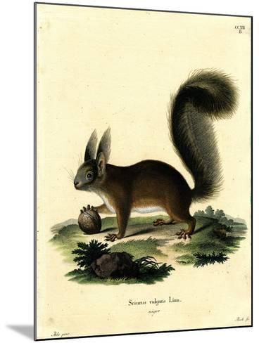 Eurasian Red Squirrel--Mounted Giclee Print