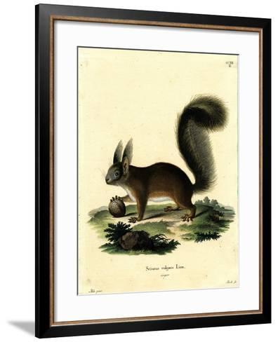 Eurasian Red Squirrel--Framed Art Print