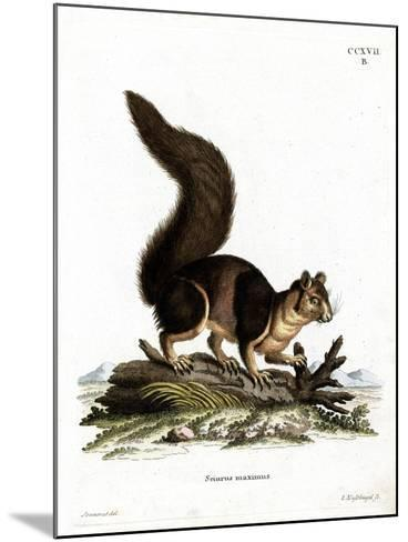 Indian Giant Squirrel--Mounted Giclee Print