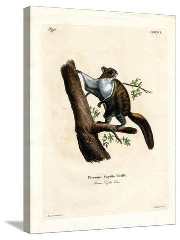 Javan Flying Squirrel--Stretched Canvas Print