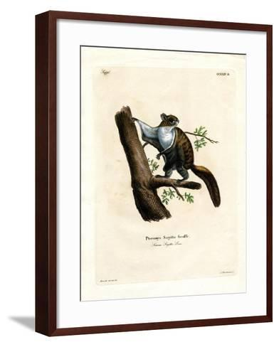 Javan Flying Squirrel--Framed Art Print