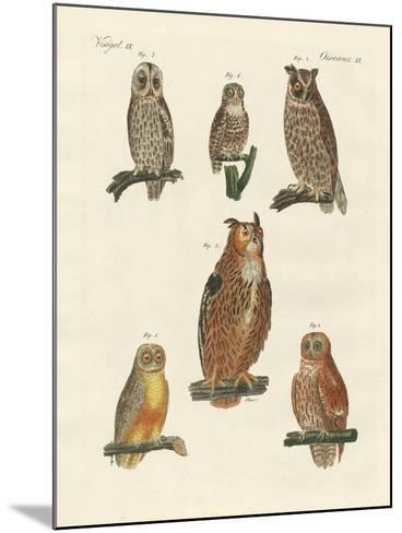 Various Kinds of Owls--Mounted Giclee Print