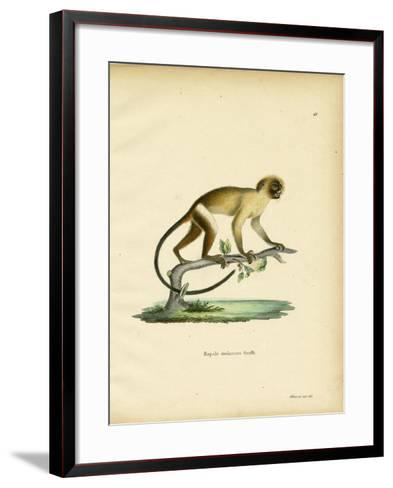 Black-Tailed Marmoset--Framed Art Print